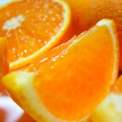 濃厚清見オレンジ5kg 1万円