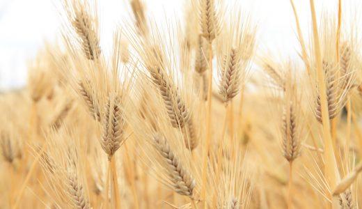 ふるさと納税「もち麦・雑穀」の人気ランキング!おすすめの「もち麦・雑穀」定番返礼品をチェック