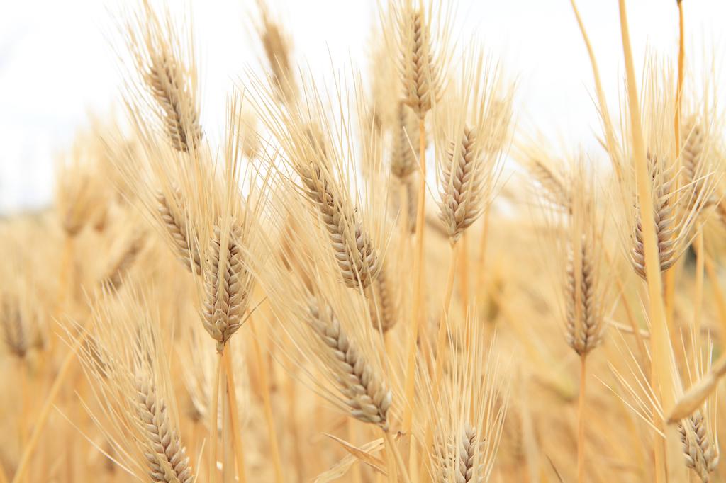 もち麦の人気ランキング