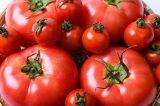 トマトの人気ランキング