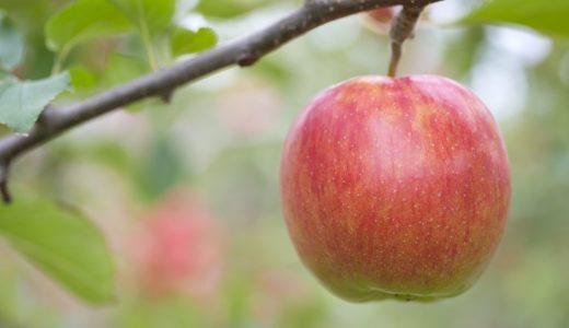 ふるさと納税「りんご・梨」の人気ランキング!おすすめの「りんご・梨」定番返礼品をチェック
