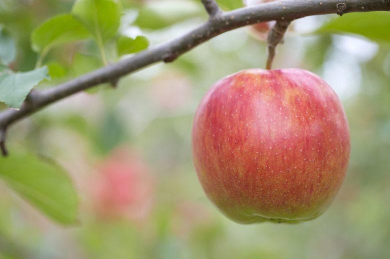 りんごの人気ランキング