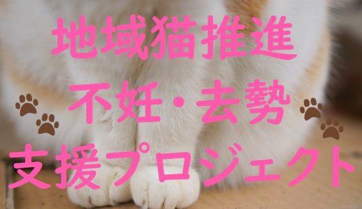 ふるさと納税では動物愛護を応援! 地域猫推進・不妊・去勢支援プロジェクト