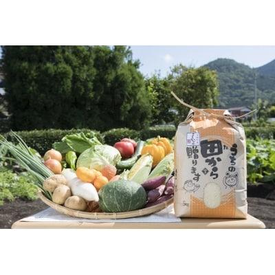 せいよ旬の野菜・果物・宇和米5kg詰合せセット