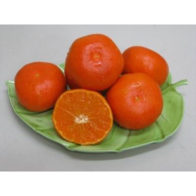 香川県オリジナル品種『小原紅早生みかん』約5kg【A-32】
