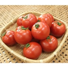 《数量限定》若狭の恵 訳あり めぐみでぃトマト 計3kg