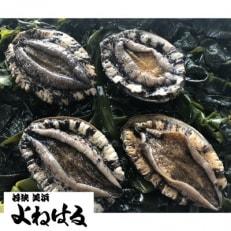 【金曜日発送】若狭湾の天然活アワビ 500g以上【中サイズ/オスのみ】
