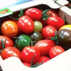 黒宮農園「くろみのミニトマト」2箱セット