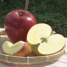 甘い!希少!りんご あいかの香り 約3キロ!