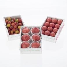 めちゃうまトマト食べ比べセット(500g×3箱)