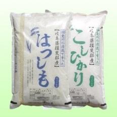 特別栽培米 22kg 【玄米】(ハツシモ/コシヒカリ)