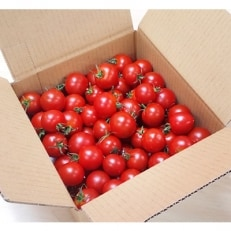 フルーツトマト「太陽のめぐみ」1kg
