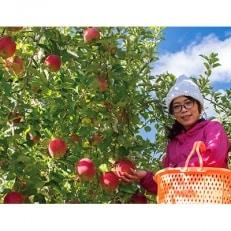 真田の里 上田市産 サンふじりんご 5kg