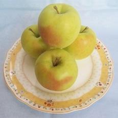 横手産りんご「ぐんま名月」約5kg