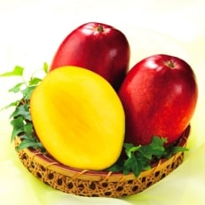 とろける甘さと芳醇な香り!完熟マンゴー1kg(財宝)