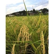 【平成30年産 新米】直播き 農薬不使用栽培『日本晴』玄米5kg