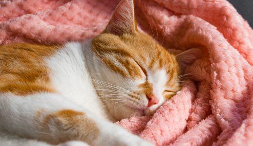 ふるさと納税「毛布」の人気ランキング!おすすめの「毛布」定番返礼品をチェック