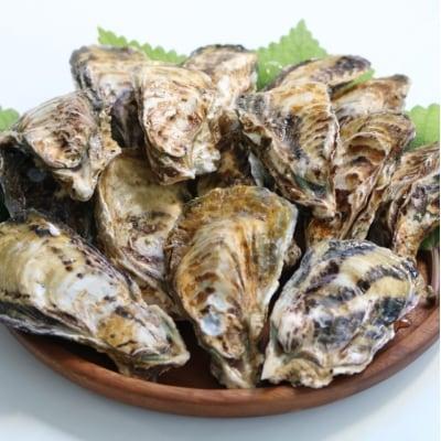 殻付き牡蠣(室戸海洋深層水)