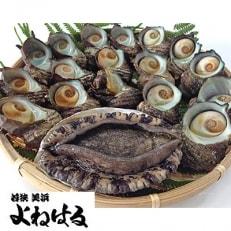 若狭湾の特選天然活アワビ【オスのみ、中サイズ】と素潜り活サザエ1.1kg以上