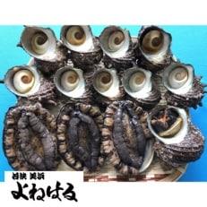 【金曜日発送】若狭湾の天然活アワビ 200g以上【小サイズ】&活サザエ 700g以上