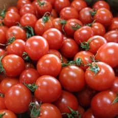 全国最大級の生産地の「ミニトマト3kg」【2019年4月初旬以降発送】
