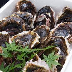岩牡蠣セット150g前後×10個前後(加熱用)【6月~8月発送】