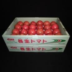 長生きトマト2箱(20玉もしくは24玉×2)