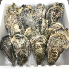 宮島が育んだ冷凍牡蠣(殻付き)15ヶ入