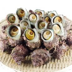 舟屋のまち・伊根の磯の香り豊潤な活け天然サザエ4kg