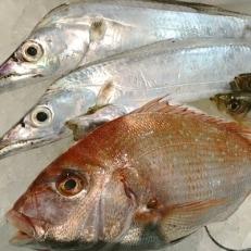 八幡浜発!竹中水産の「たっぷり鮮魚BOX」魚好きにはたまらない!