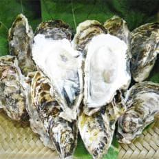 【かけあしの会】岩手県三陸宮古産皐月(サツキ)牡蠣10個セット ※加熱用
