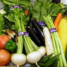 【地元新鮮野菜】香取市産 新鮮お野菜セット