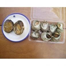 【伊豆の恵み2種 Bセット】ボイルサザエ・あわび味噌漬け