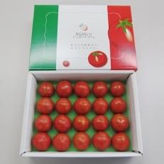 シュガートマトビアンコ08 化粧箱1.0kg 糖度8.0度以上
