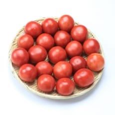 桃太郎トマトAM×3kg(20玉)