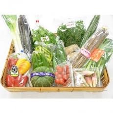 季節の新鮮野菜の詰め合わせ14種程度