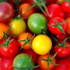 【浜松産ミニトマト】トリアンジュトマト5色のミニトマトが入ったジュエリーボックス 1.5kg