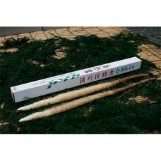 清川村特産【数量限定】きよかわ自然薯(1kg)