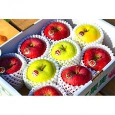 食べ比べ!2種詰合わせ 南部町の旬のりんご 3kg