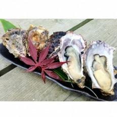 能登牡蠣 殻付 牡蠣 約3.5kg(約30個)専用ナイフ、片手用軍手付 ※加熱用