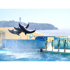 新江ノ島水族館 年間パスポート引換券 大人1枚