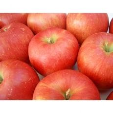フルーツソムリエが選んだ、こだわり林檎5kg箱