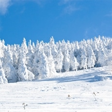 猪苗代町全スキー場共通シーズン券(一般用) 1名様分