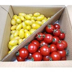 フルーツトマト「太陽のめぐみ」1kg(フルティカ500g、ティポ500g)