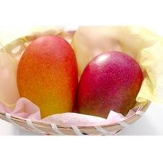 高知県南国市産/完熟アップルマンゴー(2~3個)