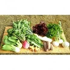 【泉澤農園】 農薬不使用・有機肥料で育てた、 季節の野菜セット