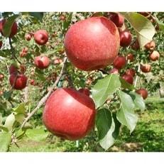 【2019年10月から発送】信州りんご シナノスイート 秀14~20玉 5kg箱