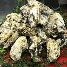 【とれたて直送 唐津産】殻付き牡蠣たっぷり3kg !(加熱用)