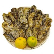 【長崎県産】殻付き牡蠣約1.5kg(加熱調理用)※軍手1組・牡蠣ナイフ1本・ダイダイ2個付
