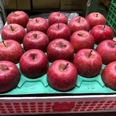 藤崎町の農家さんがお勧めする 贈答用りんご サンふじ約5kg